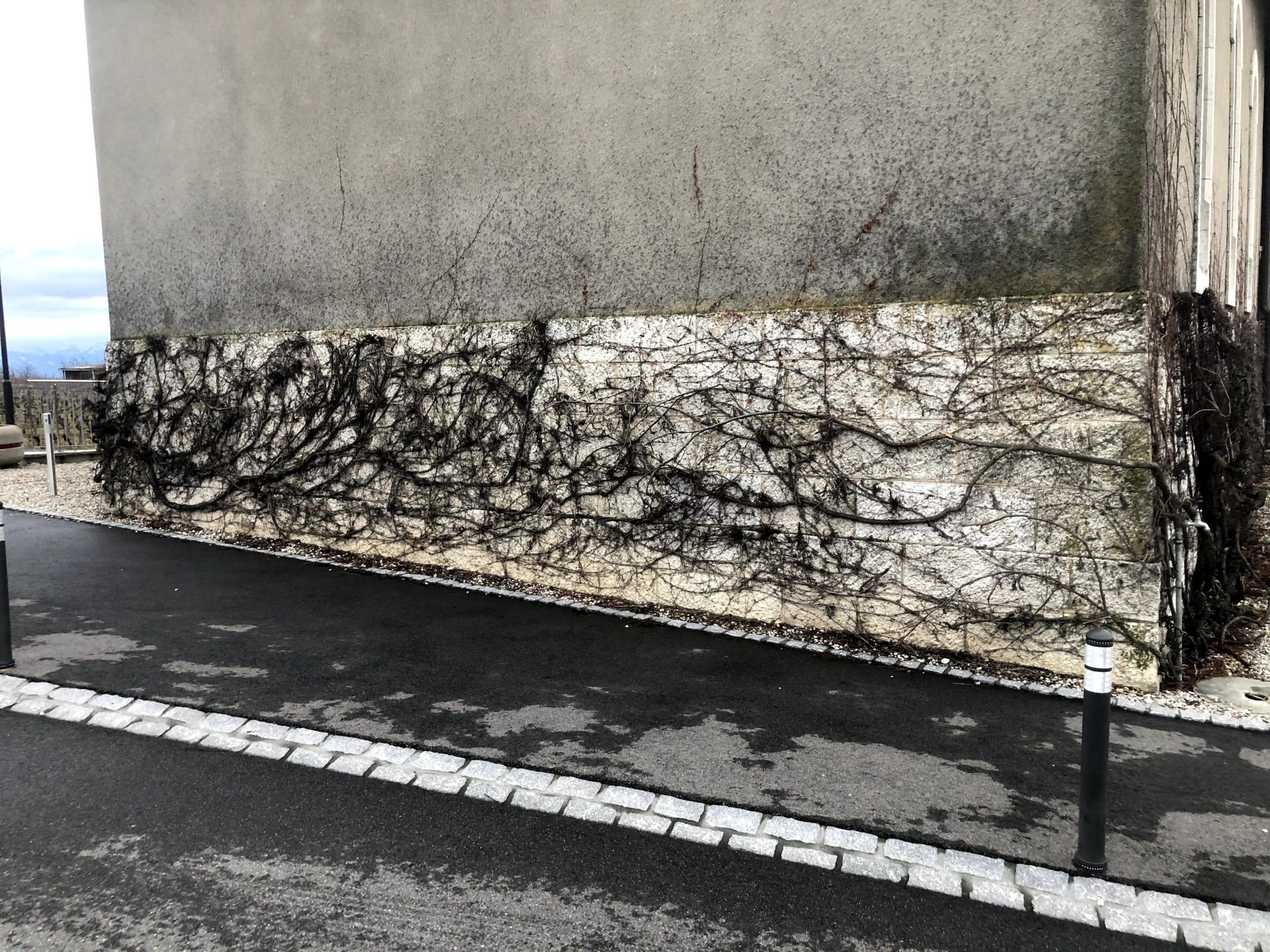 La vigne vierge recouvre un partie du soubassement en pierre
