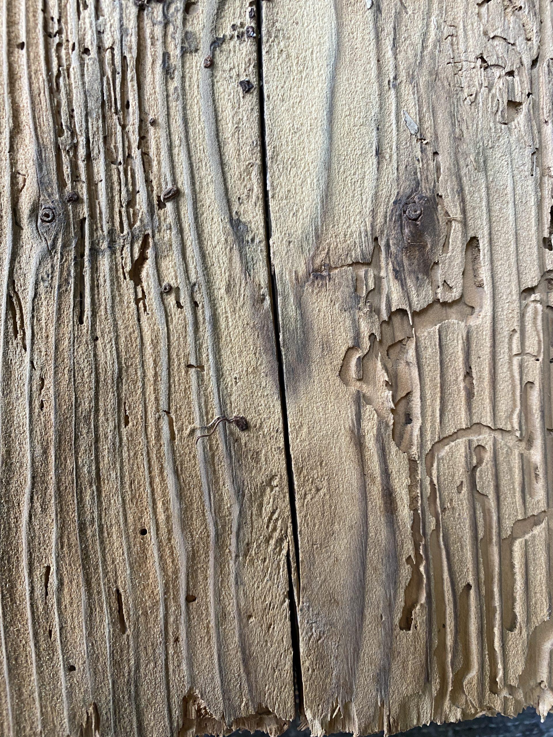 Le bois est nettoyé en surface